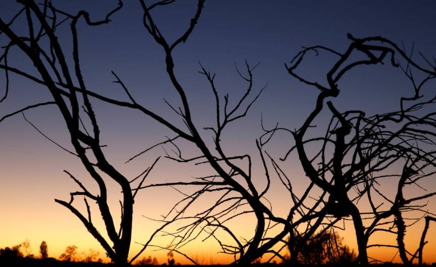 Branches [CCBY EdDunens]