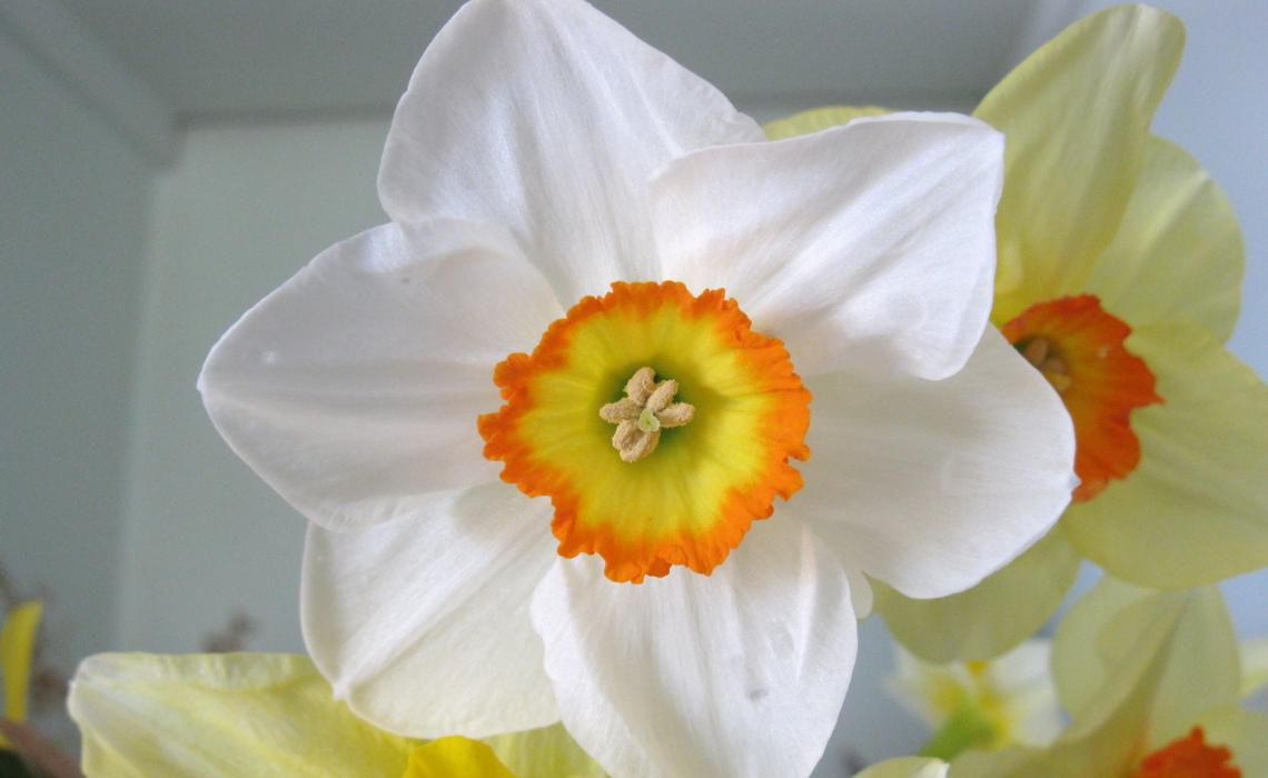 Bulb [CCBY Helen]