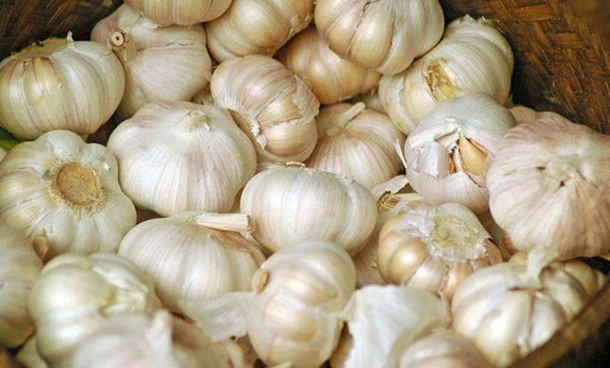 Garlic [CCBY-SA DannyO]