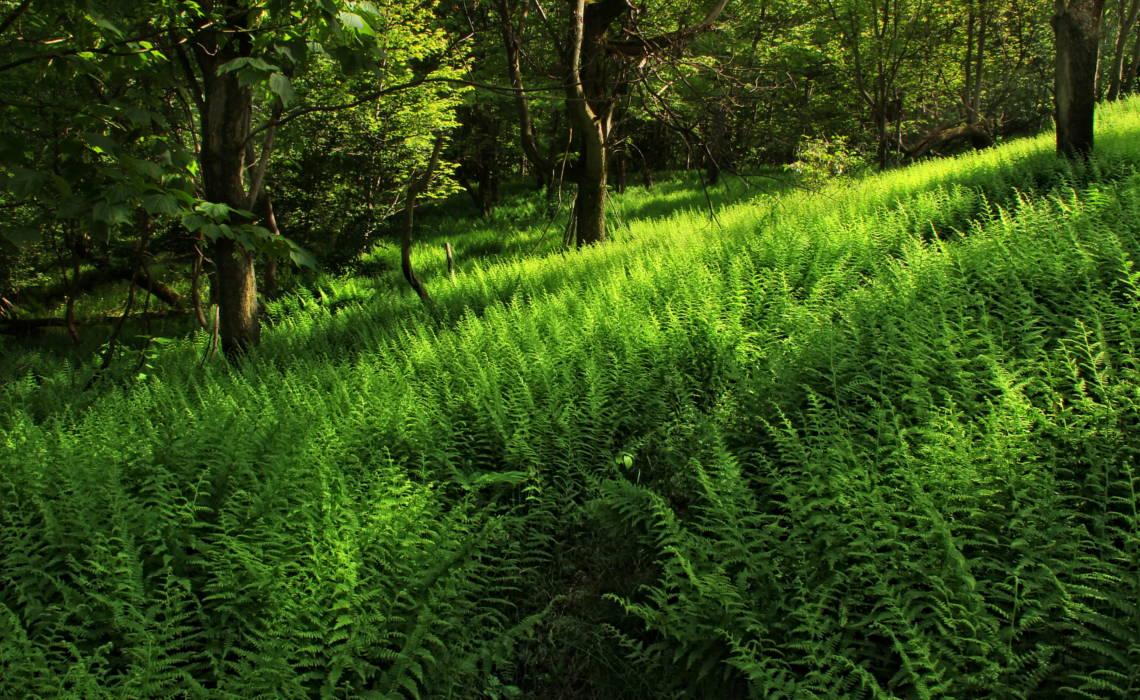 Grasss [CCBY Nicholas Tonelli]