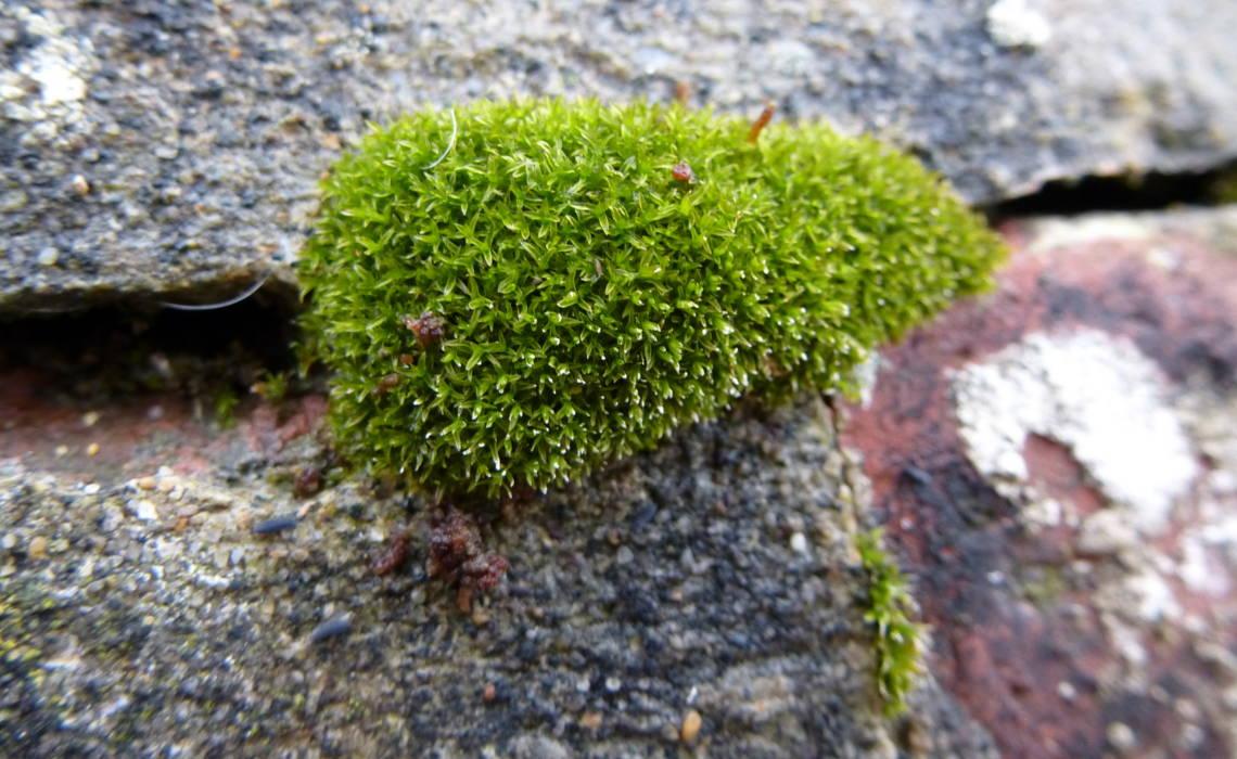 Moss [CCBY IsaacHaikdun]