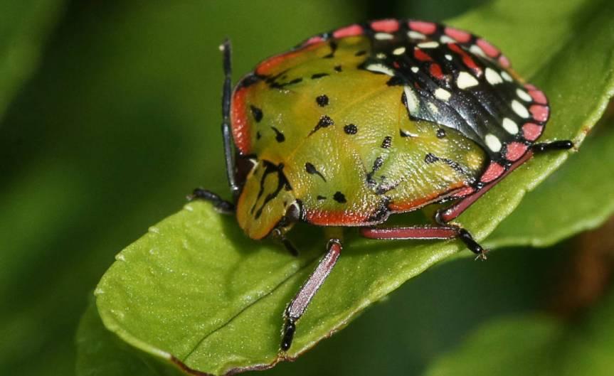 Pest [CCBY-0 Bernard Spragg]