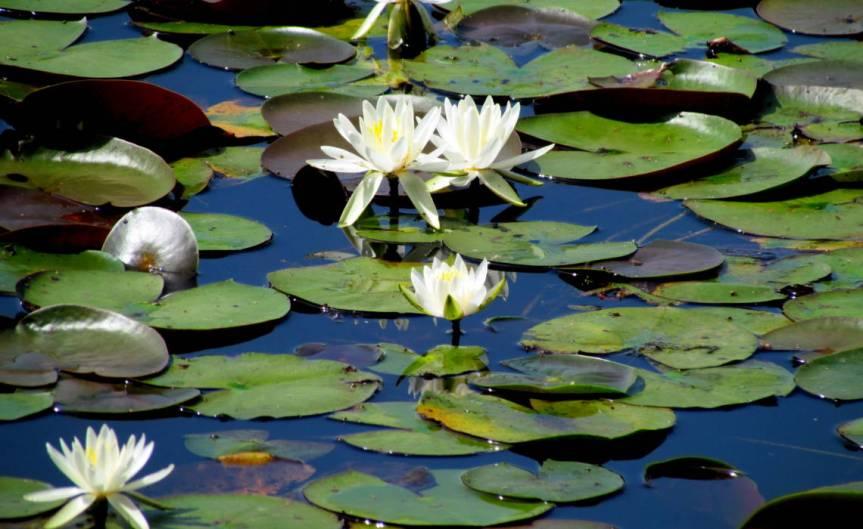 Ponds [CCBY bobistrveling]