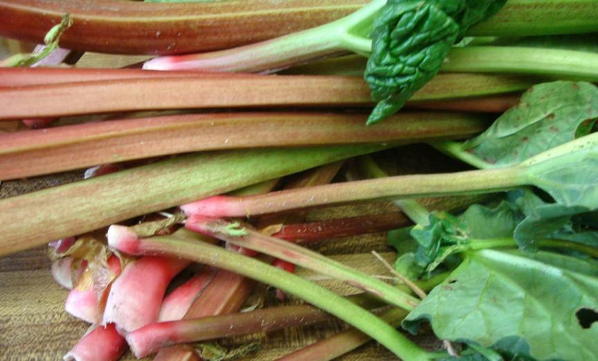 Rhubarb [CCBY Kari Sullivan]