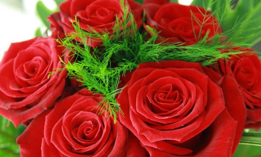 Roses [CCBY-SA ManelZaera]