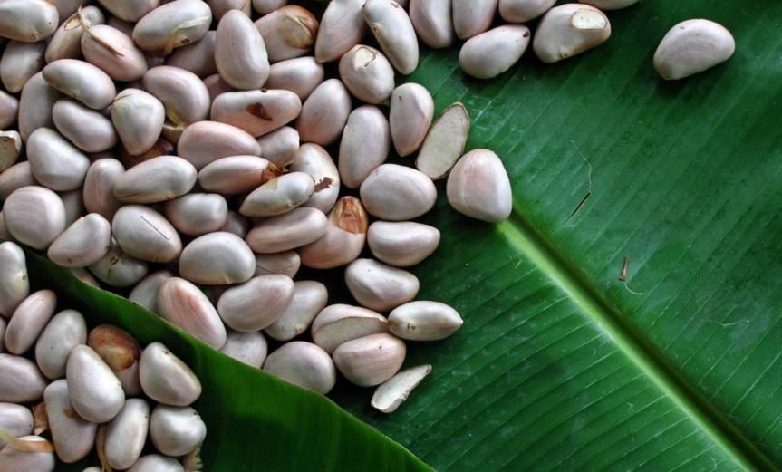 Seeds [CCBY Trilokrangan]