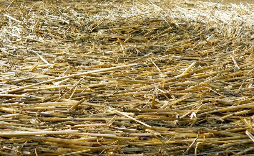Straws [CCBY Barockschloss]