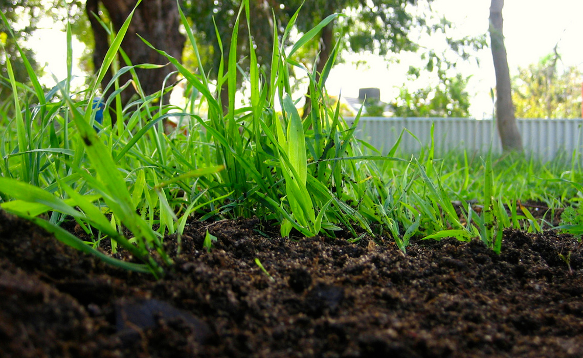 compostLawn [CCBY DianaHouse]