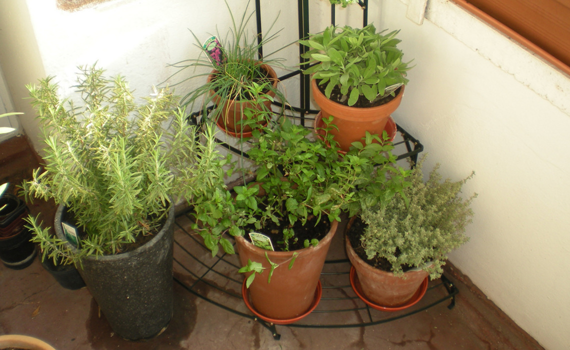 Herbs [CCBY-SA KatSummers]