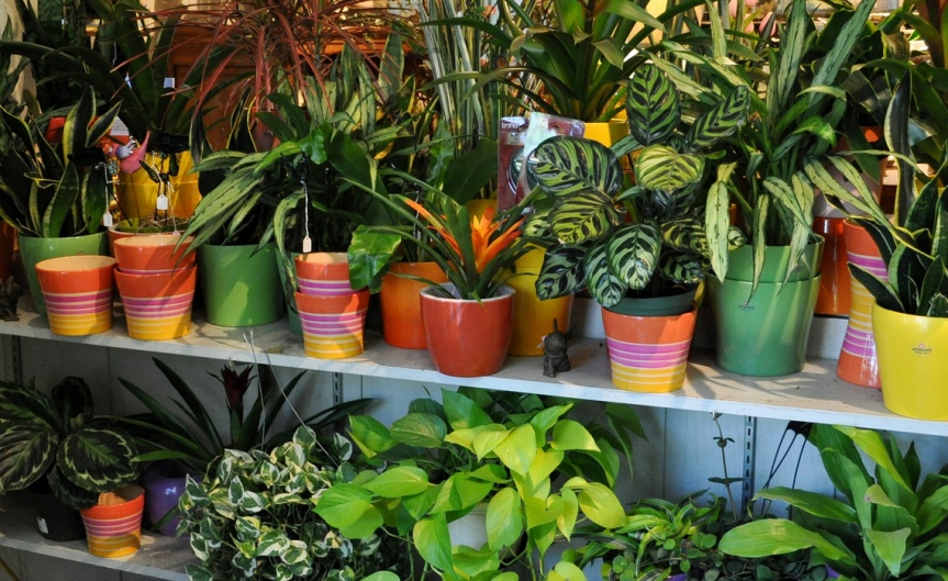 Houseplants [CCBY TheGreeneryNursery]