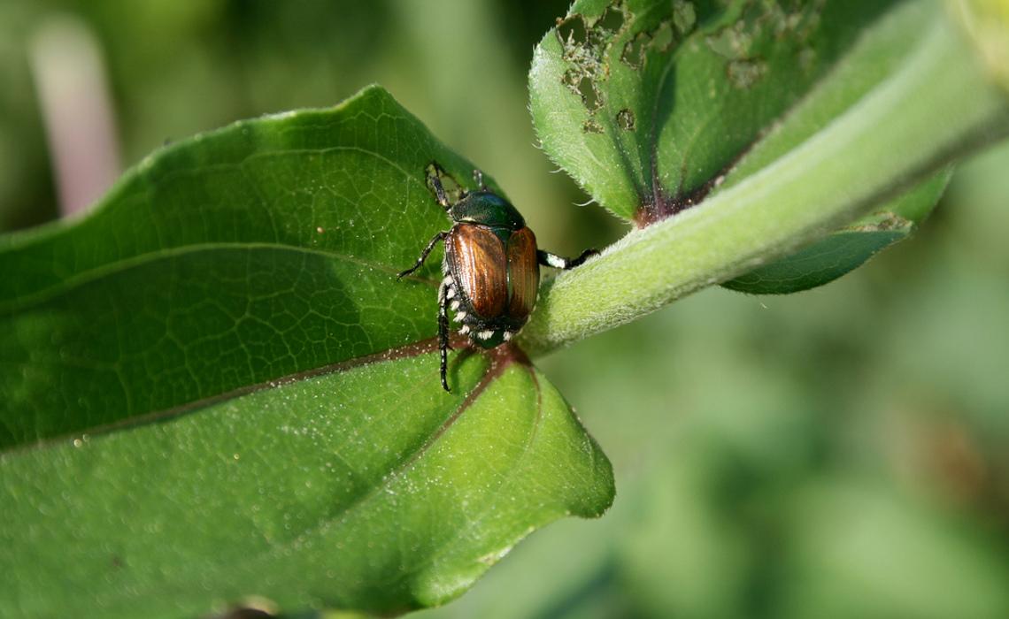 Pest [CCBY LindseyTurner]