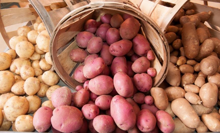 Potato [CCBY UnitedSoybeanBoard]