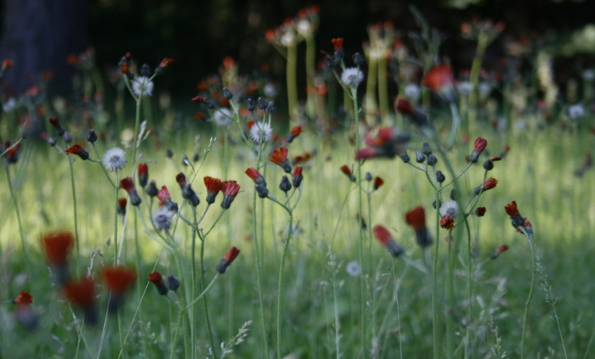 Weeds [CCBY-SA Jean-EtienneMinh-DuyPoirrier]