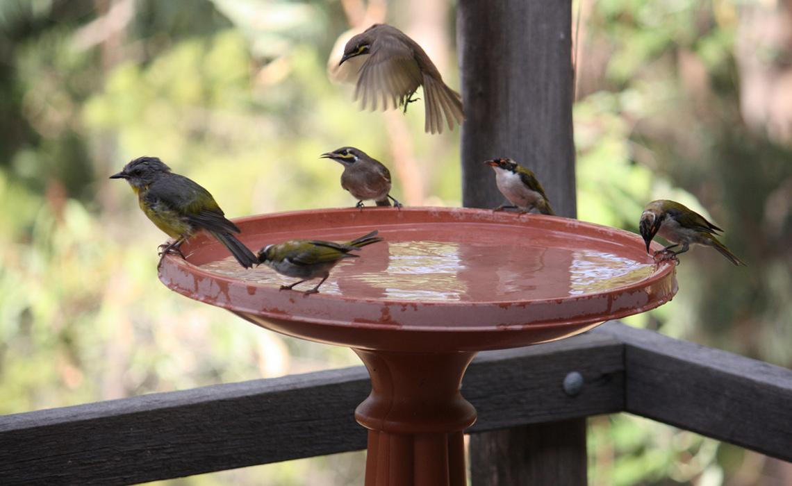 Birdbath [CCBY Peter Firminger]