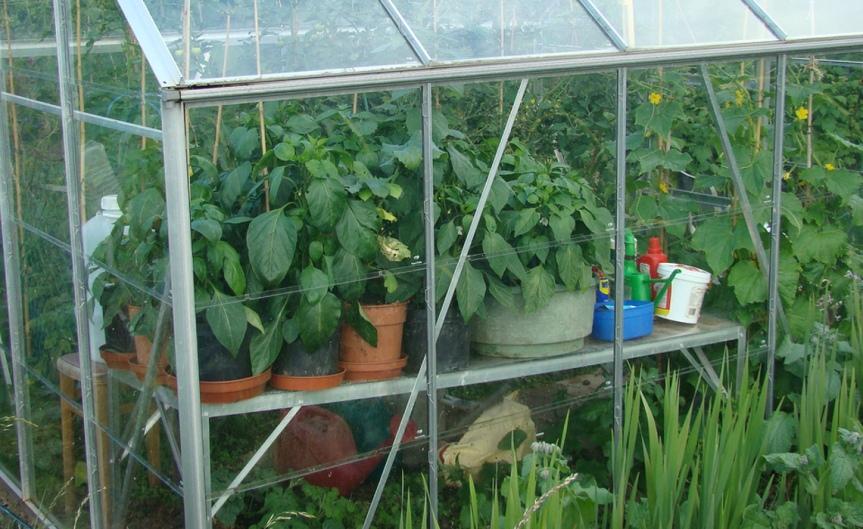 Greenhouse [CCBY Beachcomber1954]