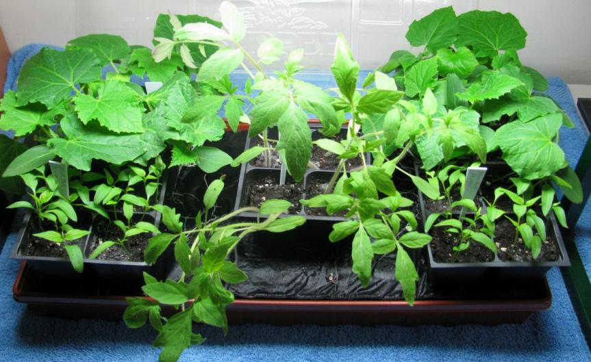 Seeds [CCBY-SA KBOwen]