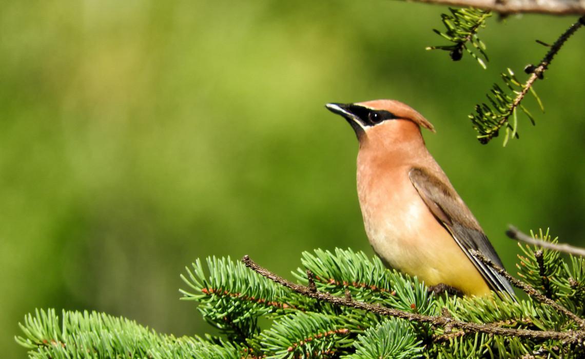 bird [CC0 andrechivinski]