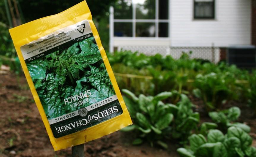 Seeds [CCBY woodleywonderwork]